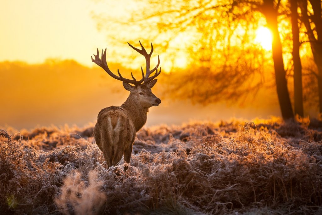 benefits of hunting concept